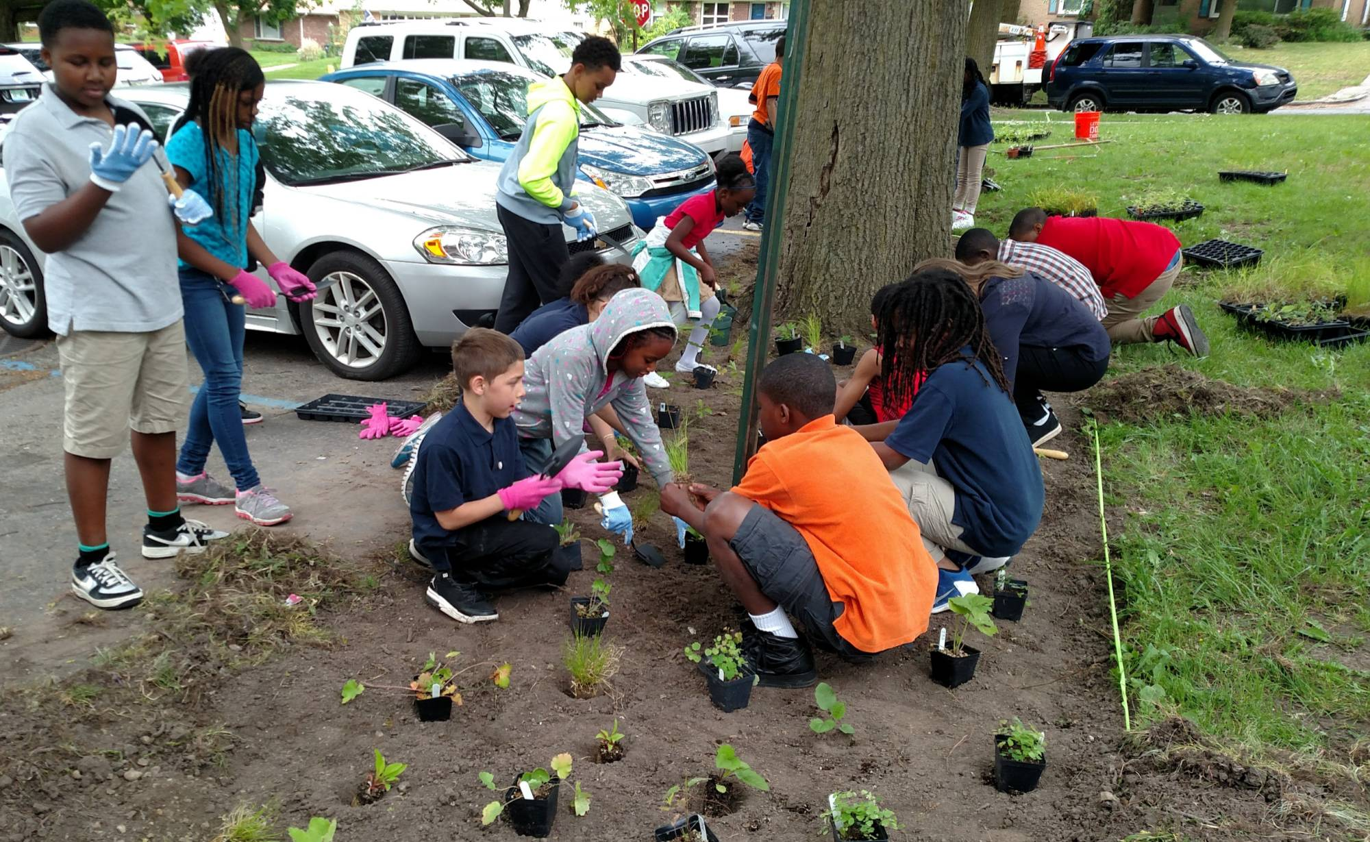 Student from Mulick Park Elementary plant native plants at their school